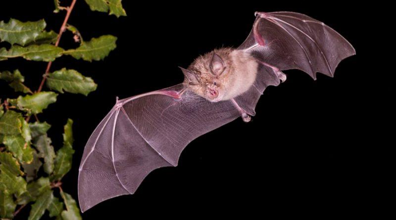 ¿En qué animales podrían surgir los próximos coronavirus?