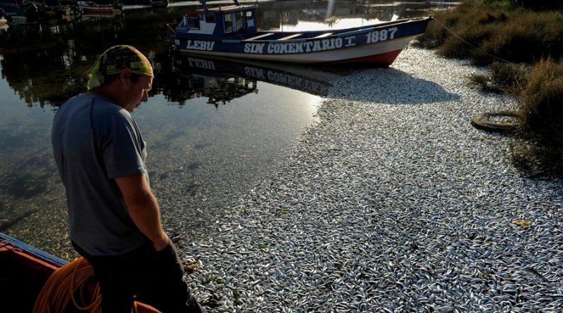 Miles de peces aparecen muertos en una playa del sur de Chile