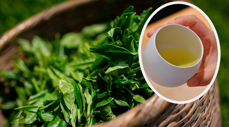 Antioxidante en el té verde aumenta proteína natural contra el cáncer