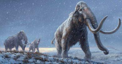 El ADN más antiguo del mundo revela cómo evolucionaron los mamuts