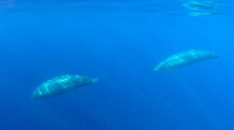 México: científicos detectan especie marina que podría ser nueva para la ciencia