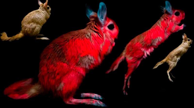 Descubren un nuevo animal que brilla en la oscuridad bajo luz UV