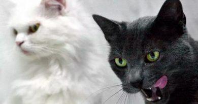 La ciencia descubre cinco tipos de dueño de gato: ¿cuál de todos es usted?
