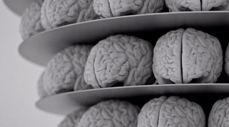 Cultivan en laboratorio organoides de 'mini cerebro'