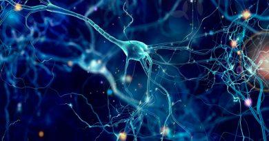Red neuronal artificial ayuda a comprender cómo procesa el movimiento el cerebro humano