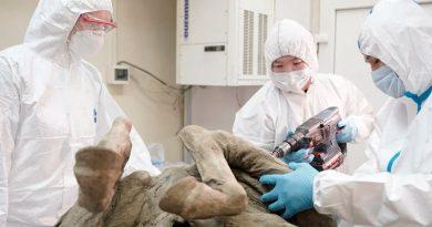 Un laboratorio ruso comenzará a extraer paleovirus de animales prehistóricos hallados en Siberia