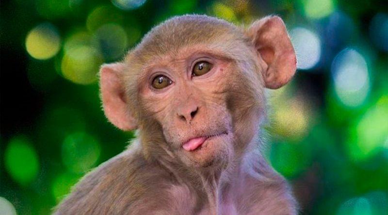 Monos experimentan conscientemente el mundo visual como los humanos