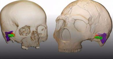 Los neandertales eran capaces de percibir y producir el habla humana