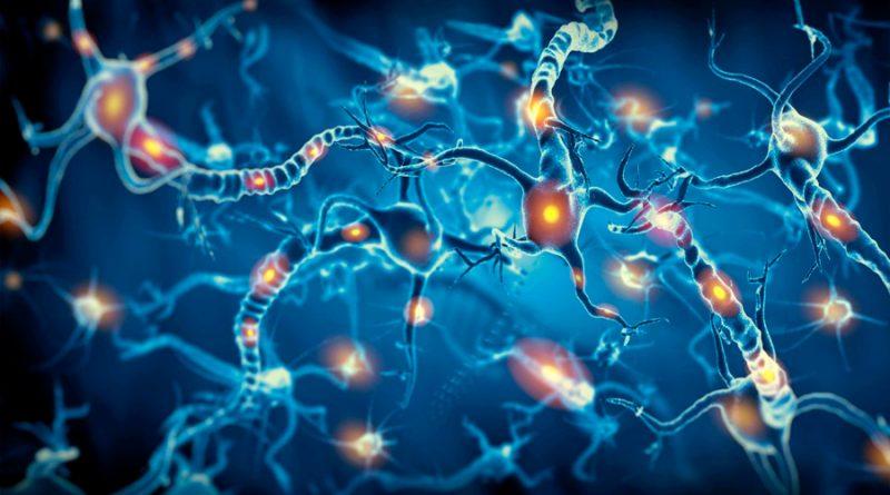 Crean neuronas que se pueden integrar en tejido cerebral humano