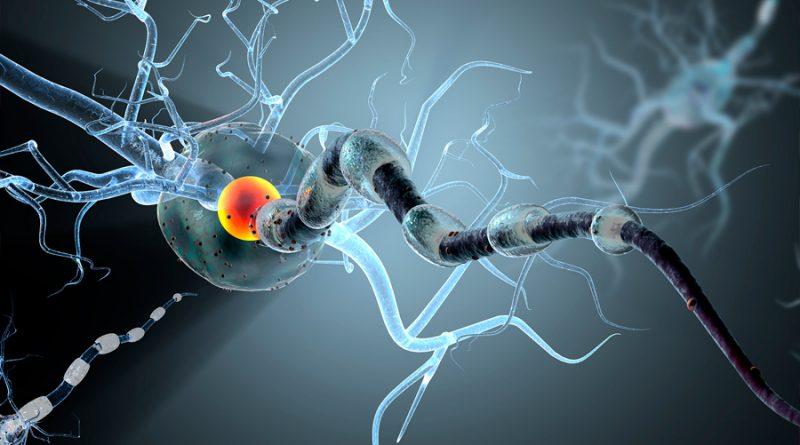 Logran revertir daños causados por la esclerosis lateral amiotrófica