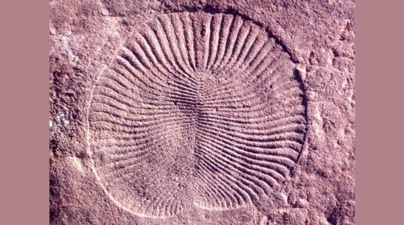 Humanos compartimos genes con criaturas de hace 555 millones de años