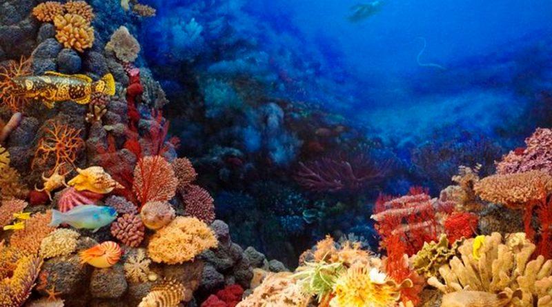 Congelación de gametos: La esperanza para los amenazados arrecifes coralinos