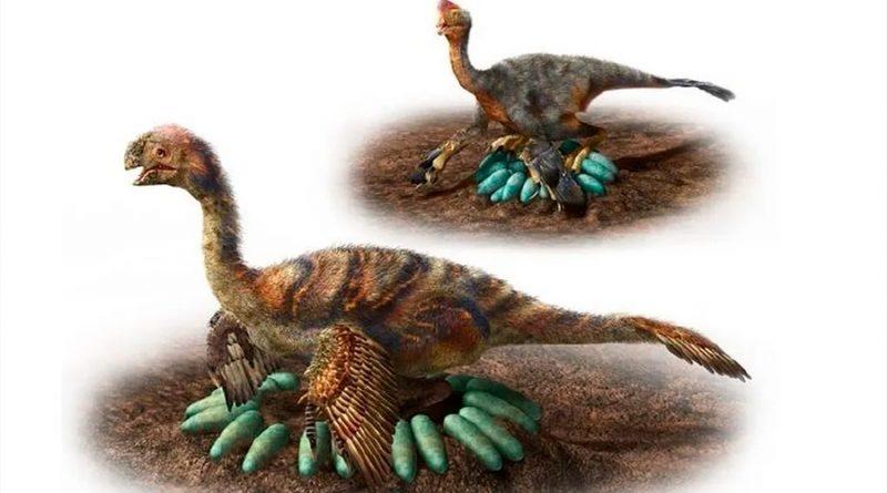 Descubren primer dinosaurio incubando y con crías fosilizadas