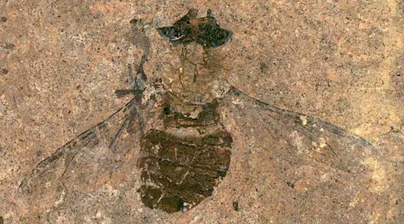 Polen fósil de 47 millones de años recuperado del estómago de una mosca