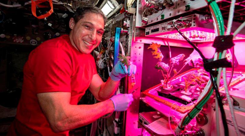 La NASA muestra como crecen nuevas plantas a partir de semillas espaciales en la ISS