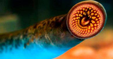 Un nuevo estudio cuestiona la teoría evolutiva de los vertebrados