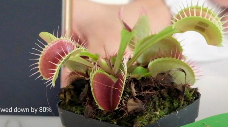 Crean un dispositivo para comunicarse con plantas mediante señales eléctricas
