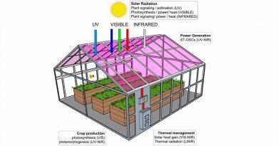 Las plantas crecerían bien en invernaderos de paneles solares