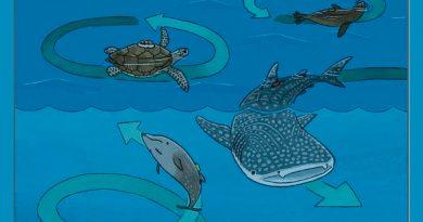 Tiburones, pingüinos y tortugas nadan en círculos y de forma muy parecida