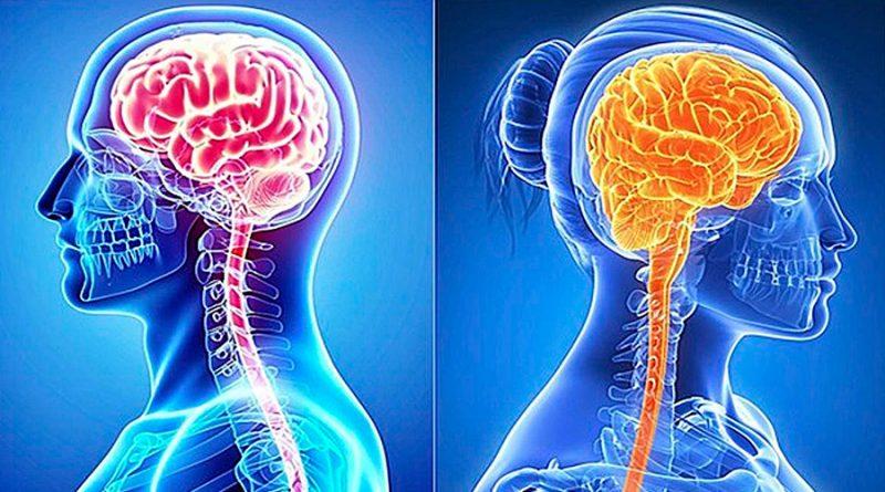 ¿En qué se diferencian los cerebros de hombres y mujeres? Apenas hay un gran cambio