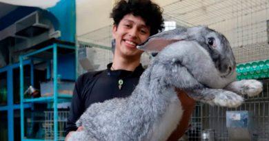 Un estudiante mexicano cría los conejos más grandes del mundo