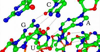 Una enzima avala que la 'máquina' de la vida surgió en un mundo de ARN