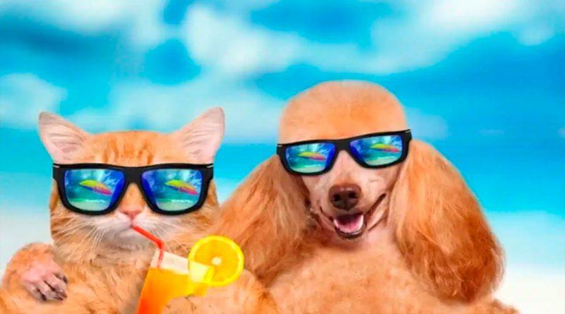 Así debes cuidar a tus mascotas de un golpe de calor según la UNAM
