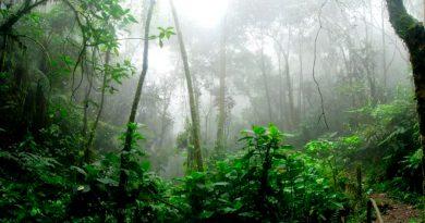 El meteorito que aniquiló a los dinosaurios también ayudó a crear la selva amazónica