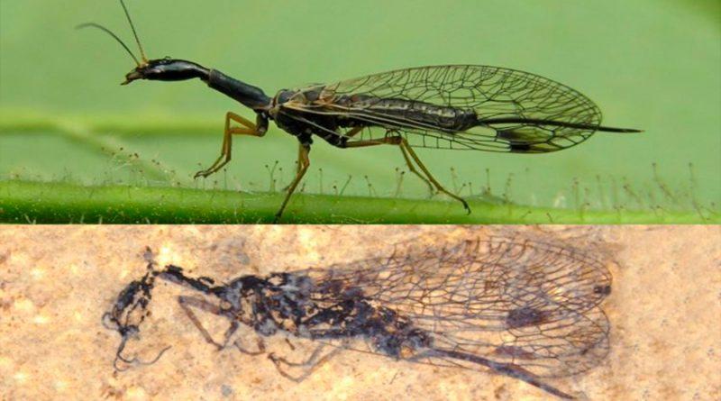 El misterio de la mosca serpiente se ahonda con nuevos fósiles