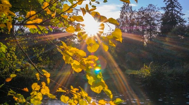 Luz solar descompone el COVID-19 mucho más rápido de lo que se pensaba