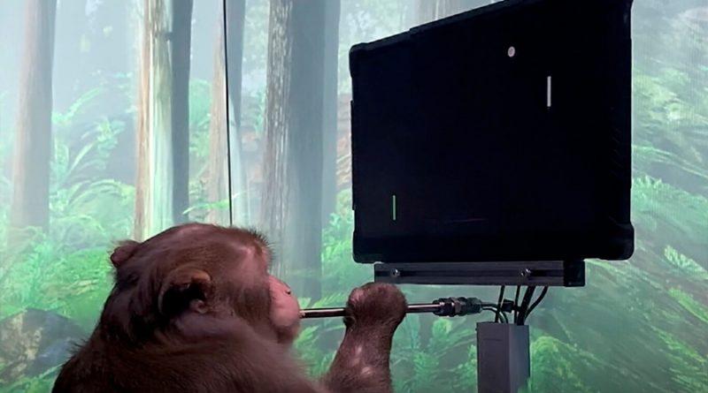 Un mono juega al pong con su mente con el Neuralink de Elon Musk