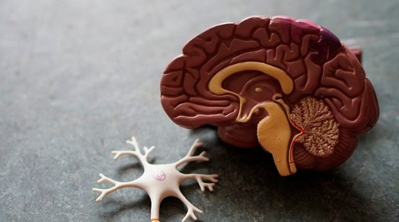 ¿Qué problemas éticos generaría la creación de organoides cerebrales?