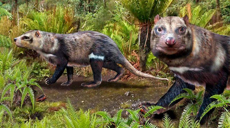 Los científicos descubren una mofeta que caminaba entre dinosaurios