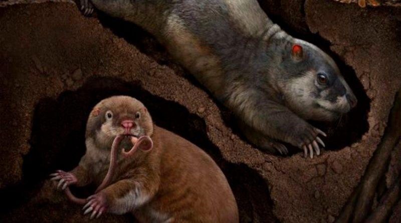 Hallan fósiles de dos nuevas especies de animales excavadores de 120 millones de años