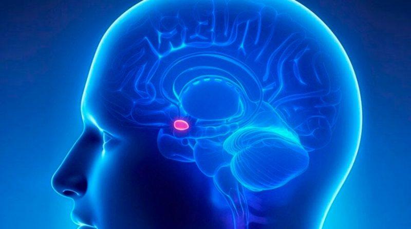 Glándula pineal: cómo funciona el enigmático órgano que regula nuestro sueño