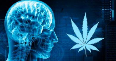 Científico mexicano descubre que sustancia del cannabis puede ayudar a tratar el Parkinson