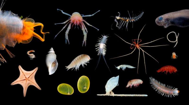 La criatura más larga hasta la fecha mide 50 metros: esto es todo lo que sabemos de ella