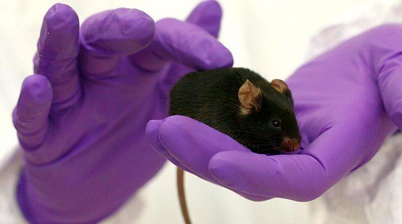 Proponen una alternativa a los ratones para ensayos de toxicidad