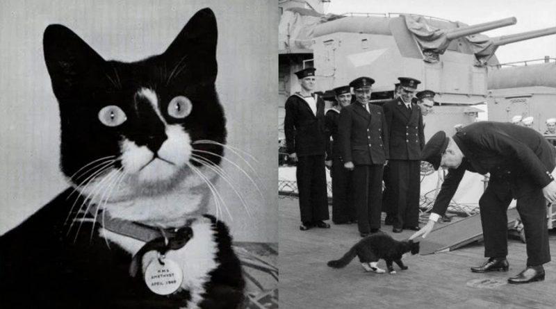 Sam el Insumergible, el gato que sobrevivió a tres hundimientos de buques en la Segunda Guerra Mundial