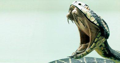 Las cinco serpientes más venenosas del mundo