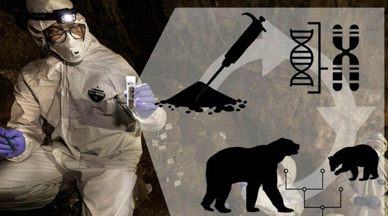 Genoma de oso de la Edad de Piedra reconstruido con ADN del suelo