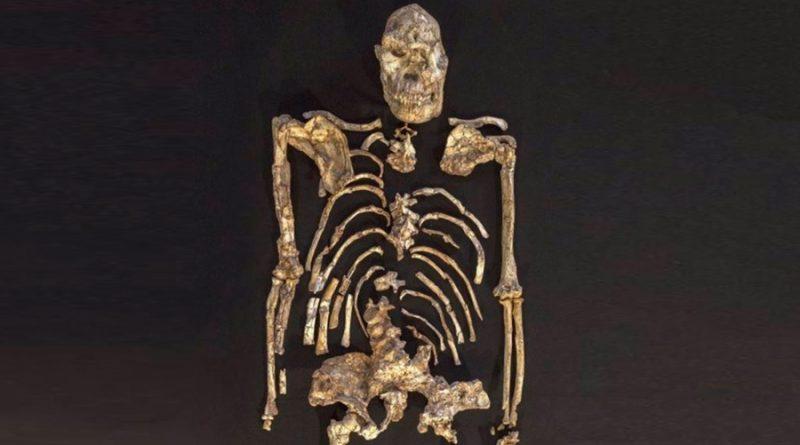 El fósil Little Foot muestra un ancestro humano aferrado a los árboles