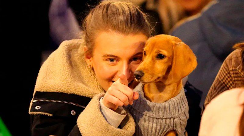 Investigadores chinos apuntan a los perros como origen de la variante británica del coronavirus