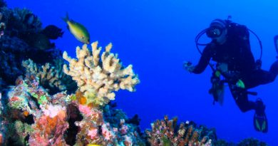 ¿Cómo sobreviven los corales de aguas profundas, sin apenas luz?
