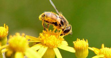 El sol puede salvar a las abejas de la extinción