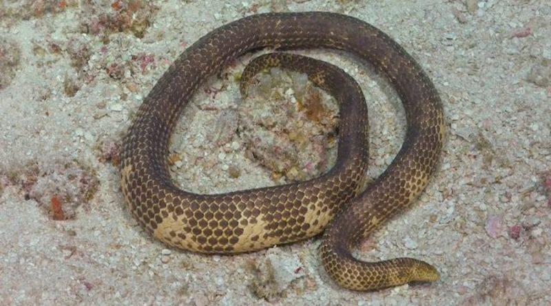 Reaparece serpiente marina después de 20 años de creerla extinta