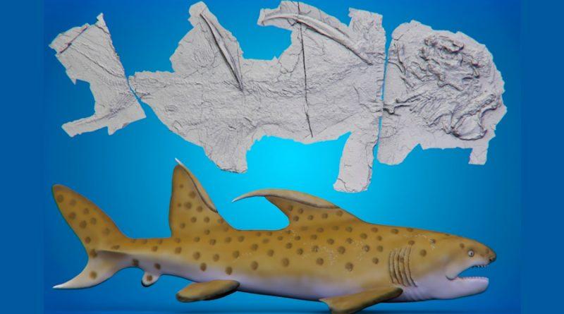"""""""Tiburón Godzilla"""": qué esconde el exótico fósil de Nuevo México"""