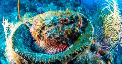 Ayuda antibiótico a curar corales con enfermedad de pérdida de tejido