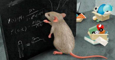 Los ratones dominan la abstracción y el pensamiento complejo