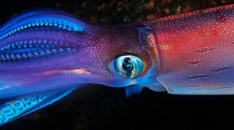 Captan por primera vez un calamar gigante nadando en las profundidades marinas; no podrás creer cómo luce